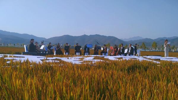 汝阳县举办首届稻田音乐节