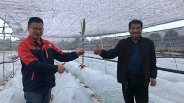 种植基地400亩生姜为脱贫助力