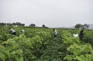 夏店镇发展蚕桑种养助力农户增收致富