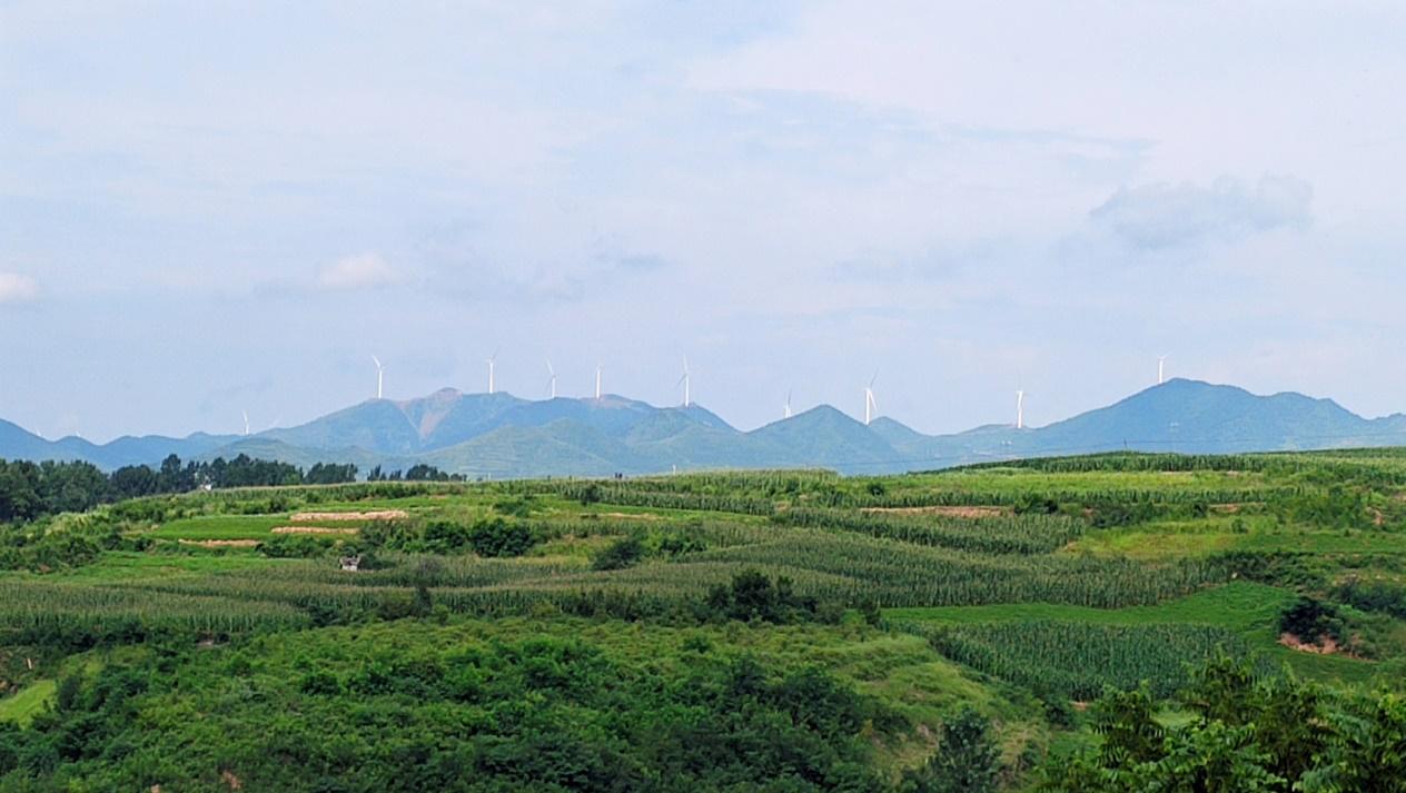 宜阳县:千亩金银花 开出致富路