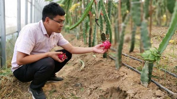 通许县厉庄乡:火龙果种植种出火红的日子