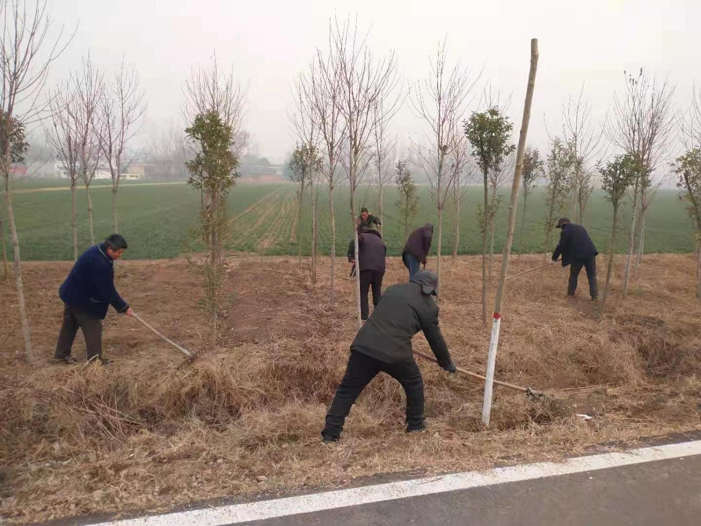 宝丰县:加强林木管护 建设绿色家园