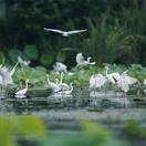 淮滨:强力保护淮南湿地