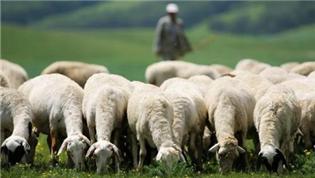 农业农村部部署2021年畜牧兽医工作