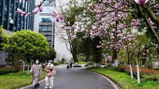 玉兰花开校园满目春