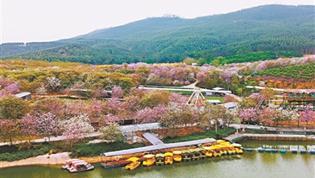 赏花经济带热乡村旅游