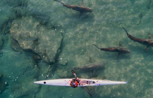 与鲨同行 皮划艇潜水员淡定游玩
