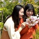 淅川:樱花惹人醉 赏花正当时