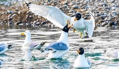 春水律动 飞鸟翔集
