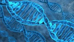 纳米测序可研究未分裂细胞基因突变