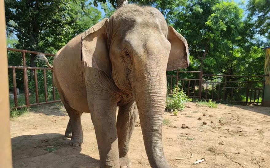 网传虐待大象等问题的情况通报