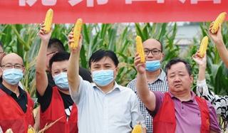 睢阳区举办2021年第四届中国农民丰收节