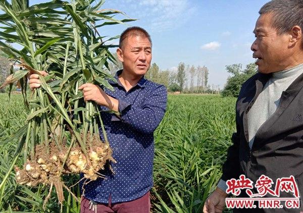 新蔡县河坞乡:发展合作经济组织助推产业发展