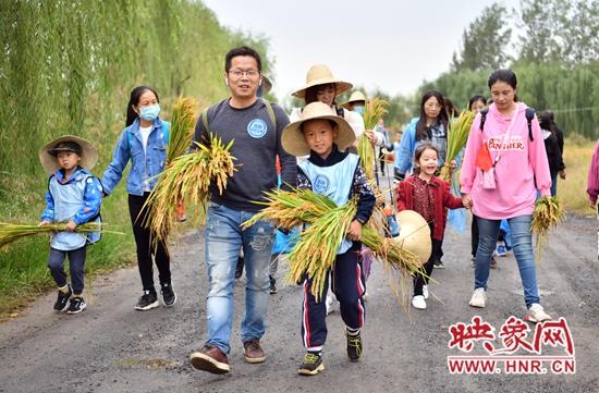 孟津县会盟镇万亩生态水稻绘出金色田园美景 感受丰收乐趣