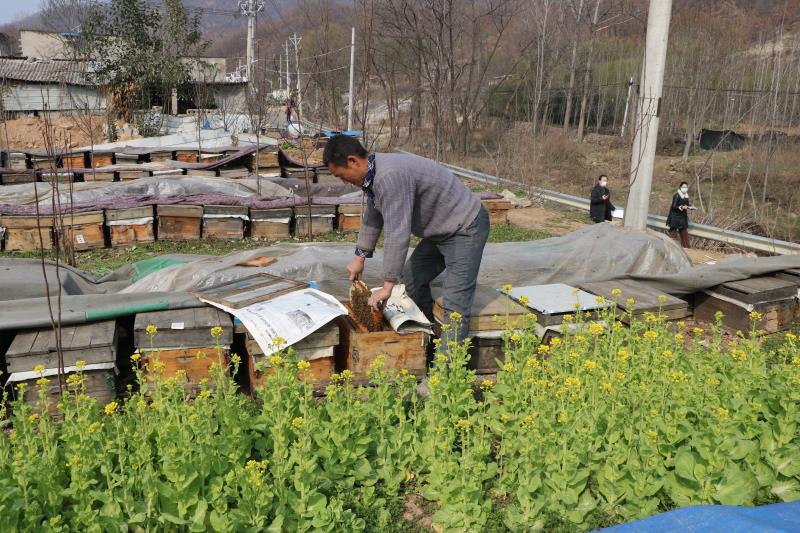 鲁山县茶庵村:打造特色农业 推动乡村振兴