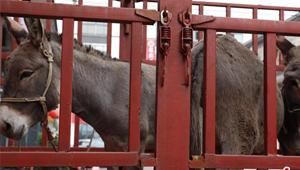 淮滨:牵着小毛驴 奔向致富路