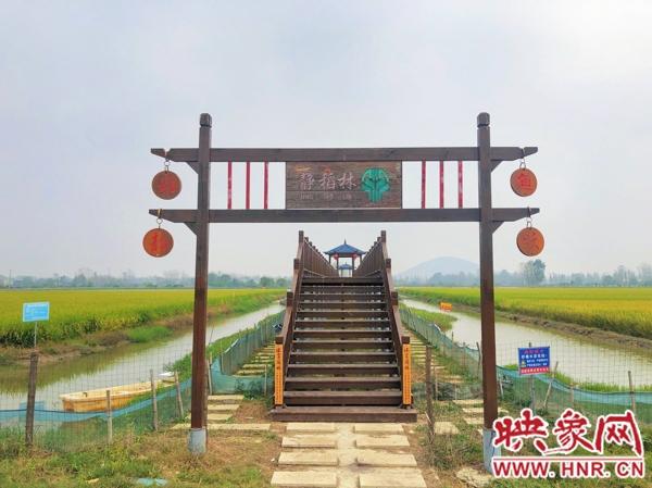 """罗山熊林村:走出一条""""稻虾共作""""的脱贫致富路"""