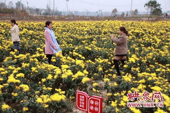 光山县:种植中药材致富带乡邻