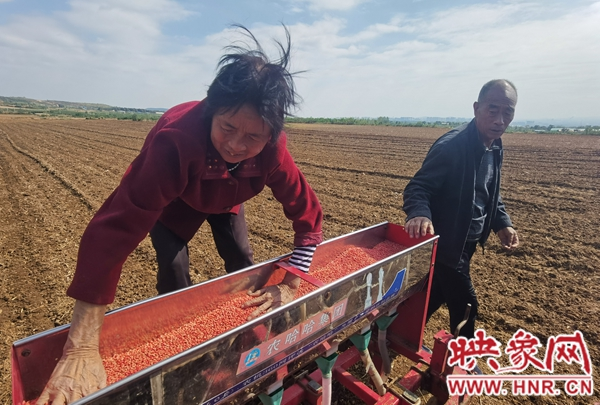 汝州:趁墒播种小麦掀高潮 气象部门支妙招