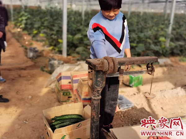 安阳市龙泉镇:基地里奔小康 日子越过越美