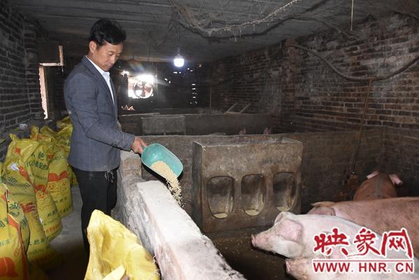 蟒川镇贫困户:养猪挣了20万 从此告别穷日子