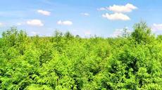 淮滨:建成全国最大的落羽杉苗木繁育基地
