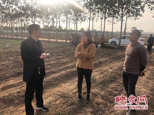 西平县专探乡打造红薯种植基地 带动群众增收