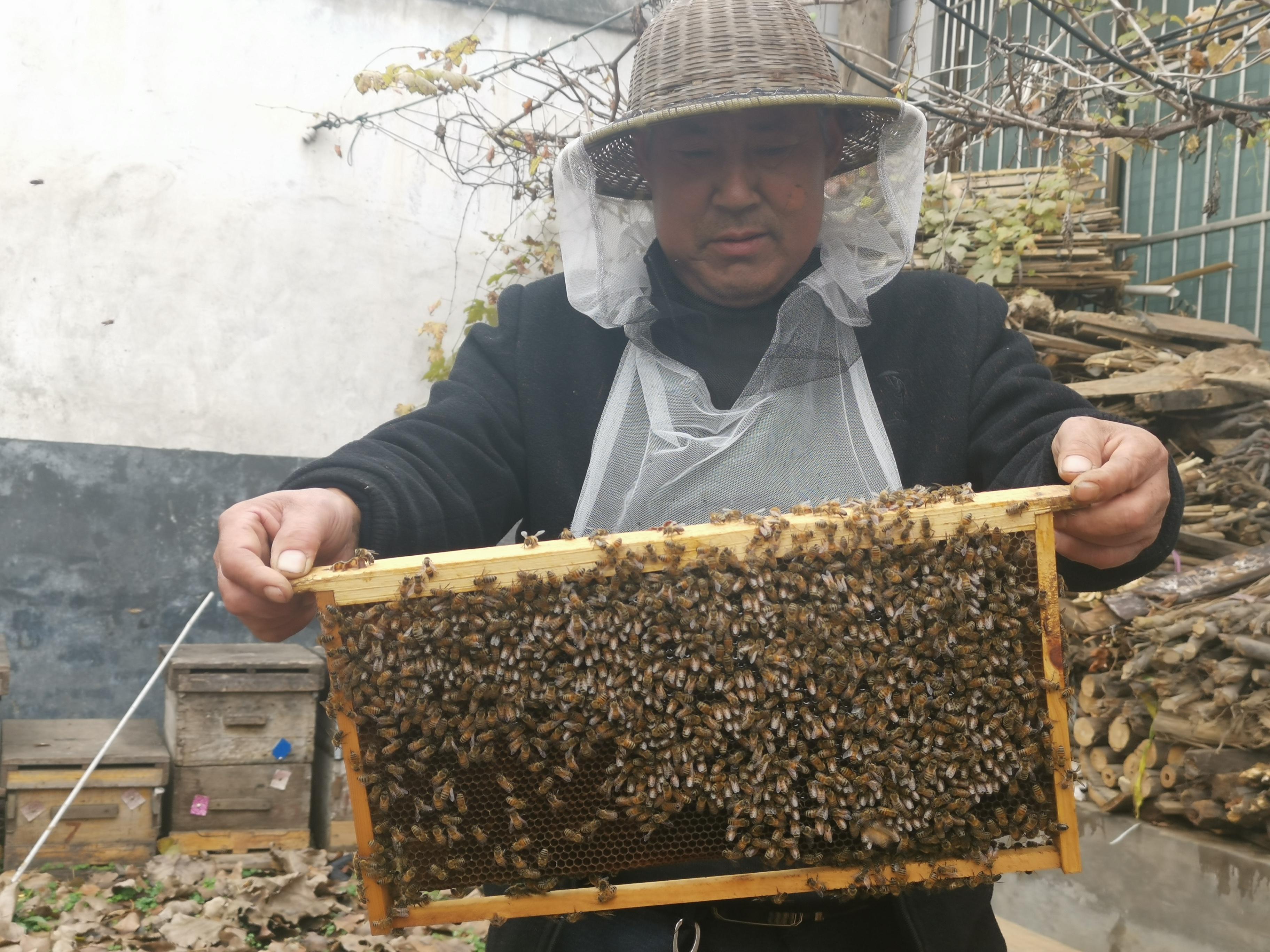 """鲁山县:六旬老人养蜂""""酿""""出幸福蜜"""