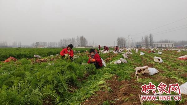 尉氏县大桥乡:产业兴 就业忙 脱贫增收有保障