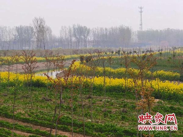 开封尉氏县:生态长廊种草药 乡村变美 村民变富