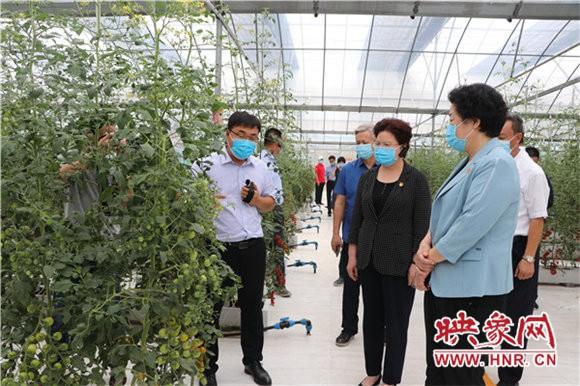 周口市蔬菜产业发展现场会昨日在扶沟召开