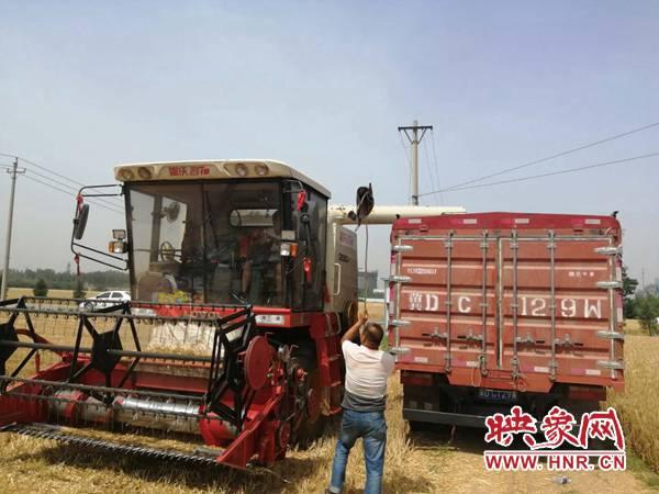 喜报!安阳市今年夏粮再获丰收  预计总产219.65万吨