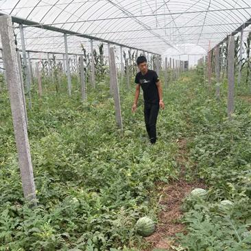 发展西瓜种植产业  带富一方贫困群众