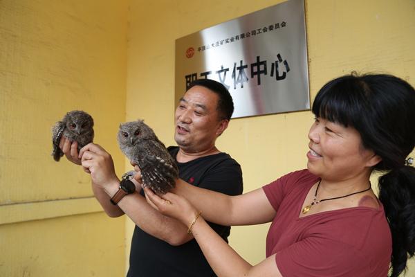 """平顶山石龙区:两只猫头鹰""""落难""""林业部门和群众携手救助"""