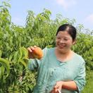 淮滨: 蟠桃种植带民增收奔小康