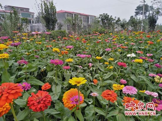 """郏县王家庄社区:人居环境整治见成效 美丽乡村有""""新颜值"""""""