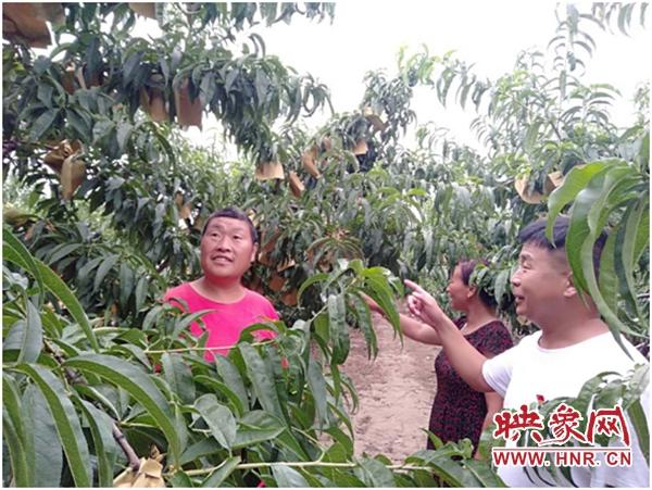 杞县板木乡:壮大集体经济 带动贫困户致富