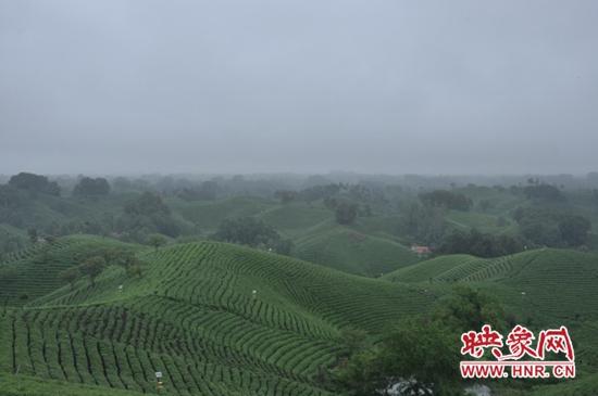 信阳浉河区:奋进新时代 茶旅融合助推乡村振兴