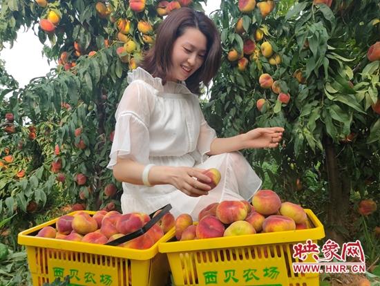 伊川县:农场果子成熟 游客纷至沓来