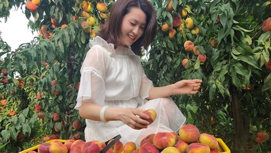 伊川县:200亩农场果子成熟 游客纷至沓来