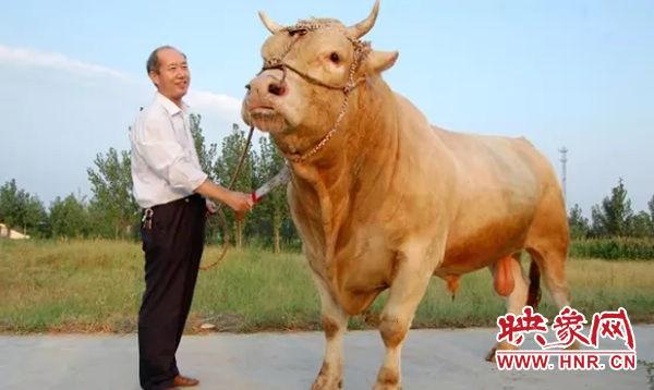 泌阳县建造夏南牛科技文化馆