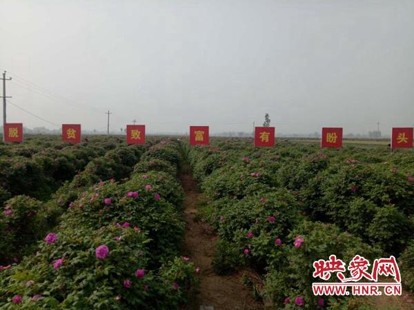 """通许县厉庄乡:产业扶贫鼓起贫困户""""钱袋子"""""""