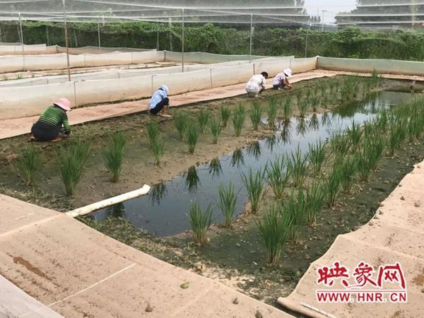 长葛巩庄村:青蛙变