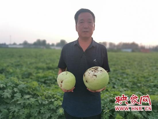 """郏县:蔬菜种植送技术 增收致富好""""钱景"""""""