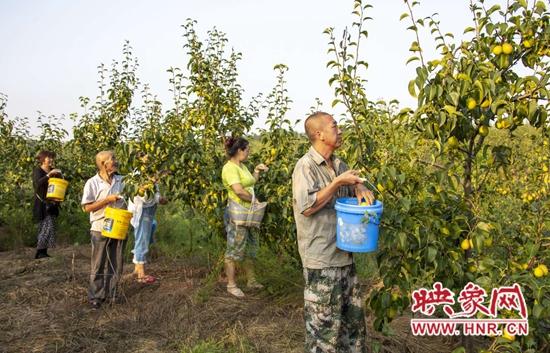 鲁山县:返乡青年包荒山 带动群众促增收