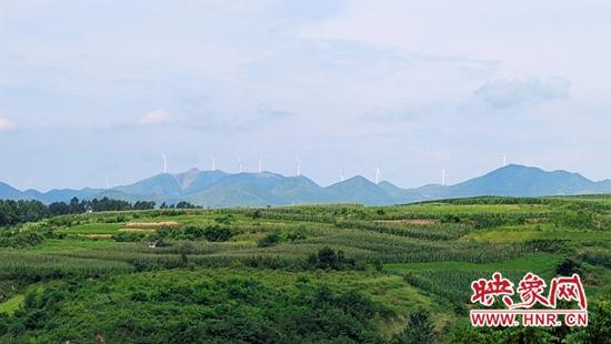 宜阳县董王庄乡:大力发展金银花种植 走出村民增收致富路