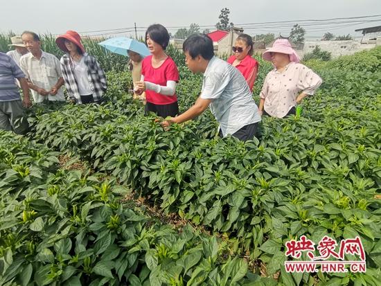 郏县:科技特派员结对服务 扎实助推产业扶贫