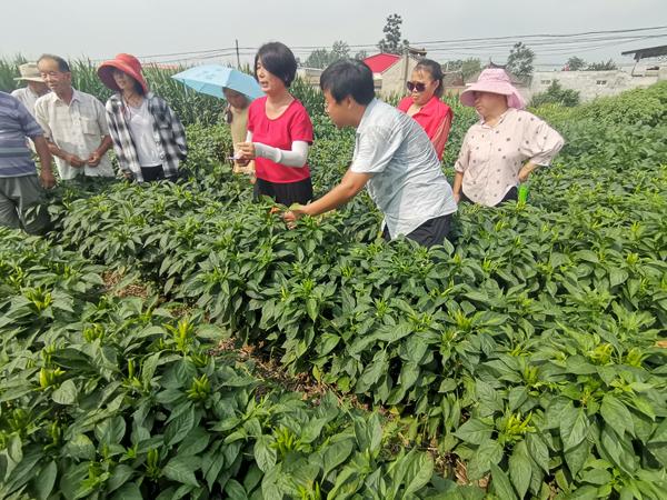 郏县:科技特派员助推产业扶贫