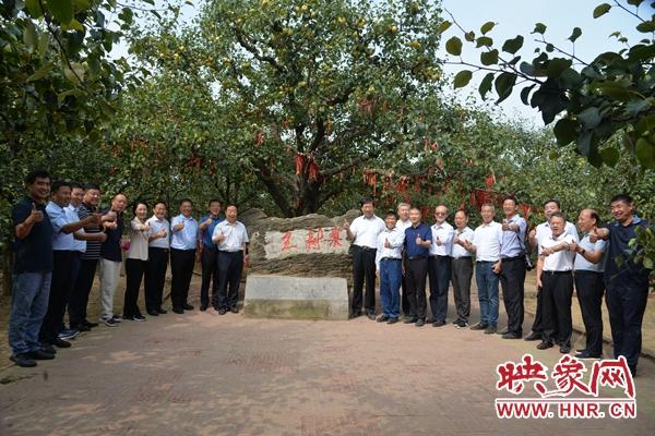 宁陵:国家梨产业技术体系大咖齐聚 助推梨产业发展