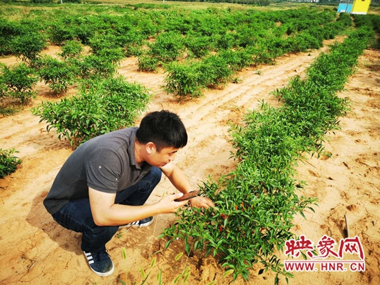 """鲁山县:外地专家为果蔬种植户""""传经送宝"""""""